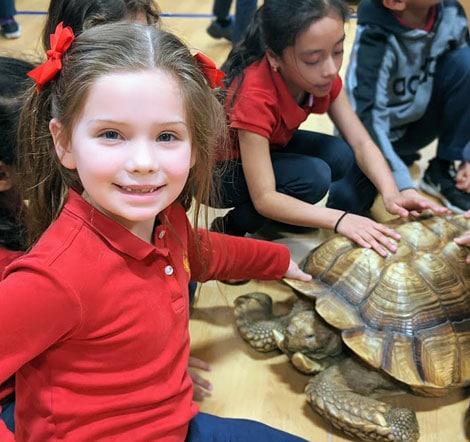 SJW Turtle